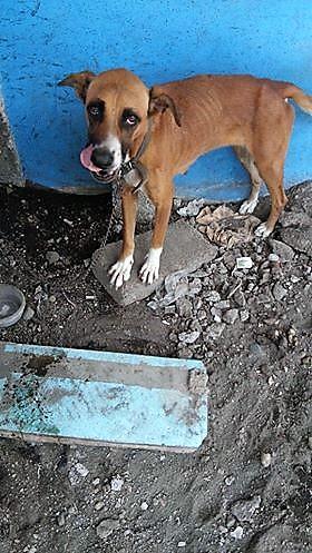 Carlota rescued